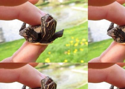 I believe I can fly Turtle