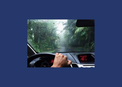 Driving in mist