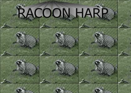 raccoon harp