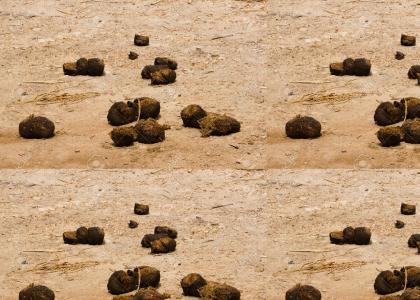 elephant feces