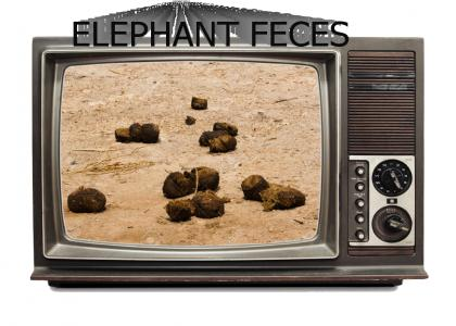 elephant feces: The Show
