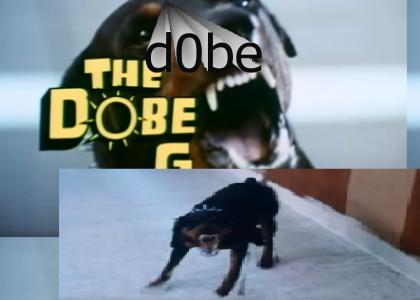 dog robs bank ((SHOCKING)) ((MUST WATCH))