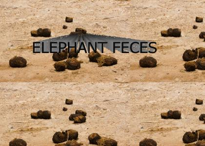 elephant feces