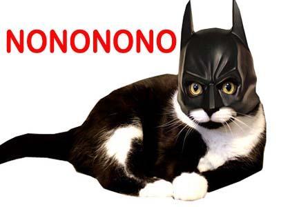 NONONONO BAT CAT