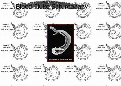 Blood Fluke Saturday