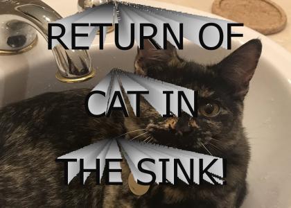 Return of Cat in the Sink
