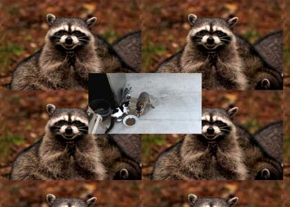 sinister raccoon