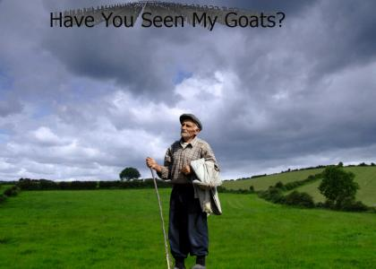 Have You Seen My Goats?
