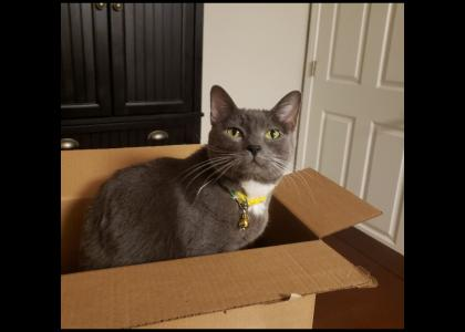 Boo is living in a box?