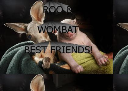 Roo and Wombat are best friends!