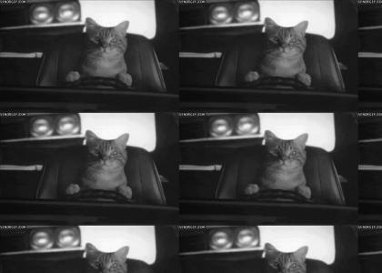 Drive cat