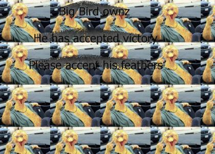 Big Bird Owns