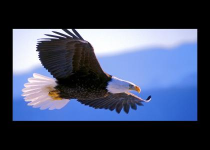 a flying eagle