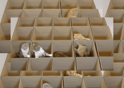Cats N' Boxes