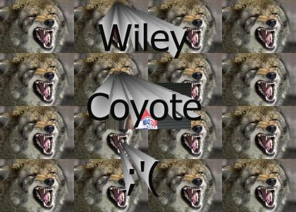 Dion Wiley Coyote
