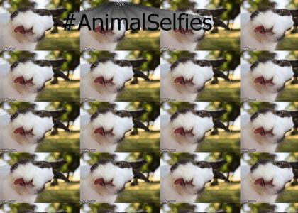 AnimalsTakingSelfies