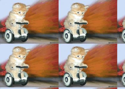 Kitty on segway