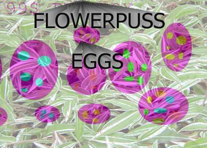 FLOWERPUSS EGGS