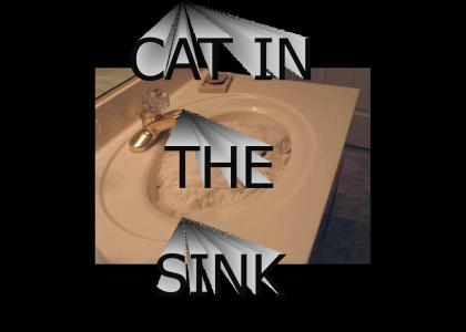 Cat In the Sink 2020